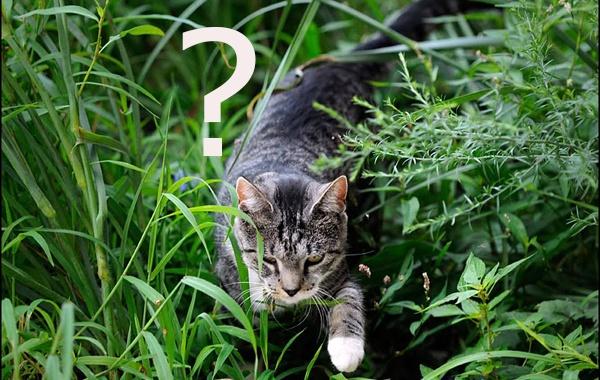 Een Kat, een Huisdier?